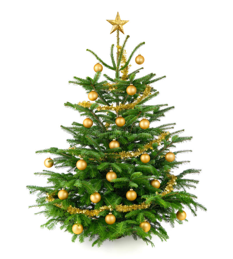 Beautiful Christmas tree with gold baubles. Clean studio shot of a very nice natural Christmas tree decorated with gold baubles and garland, isolated on white stock photography