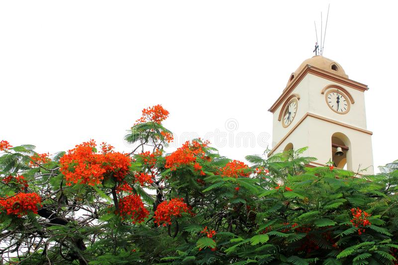 Beautiful church in Santa Cruz de la Sierra city center, Bolivia. With blooming flowers royalty free stock photos