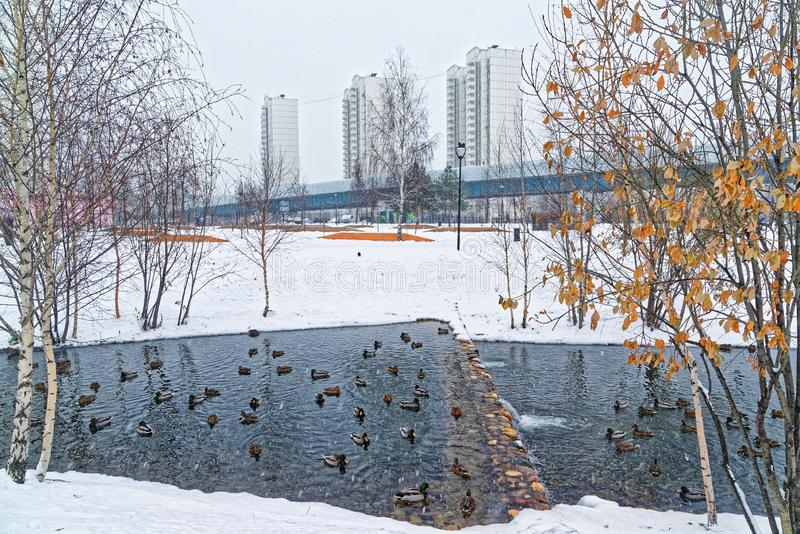 Beautiful city park on the outskirts of the city. Winter, gloomy sky and heavy snow. Ducks hibernate in an unfrozen stream. A beautiful city park on the royalty free stock image