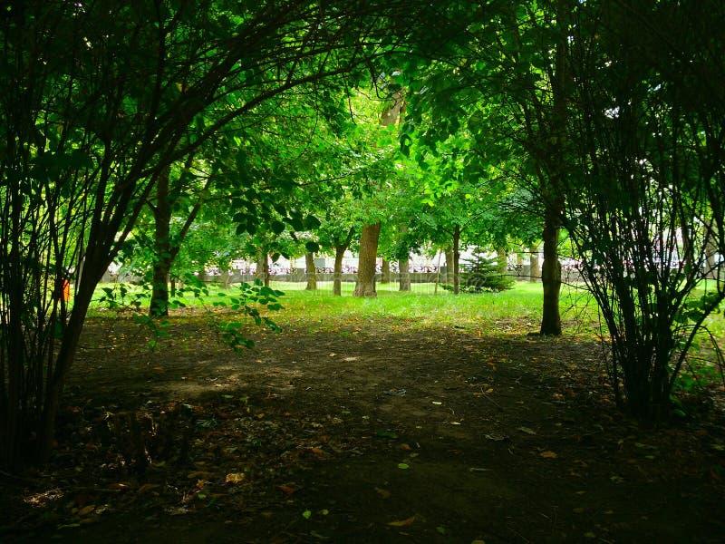 Beautiful City Park in Togliatti, Samara Region. Красивый городской парк в Тольятти, Самарская область stock photo