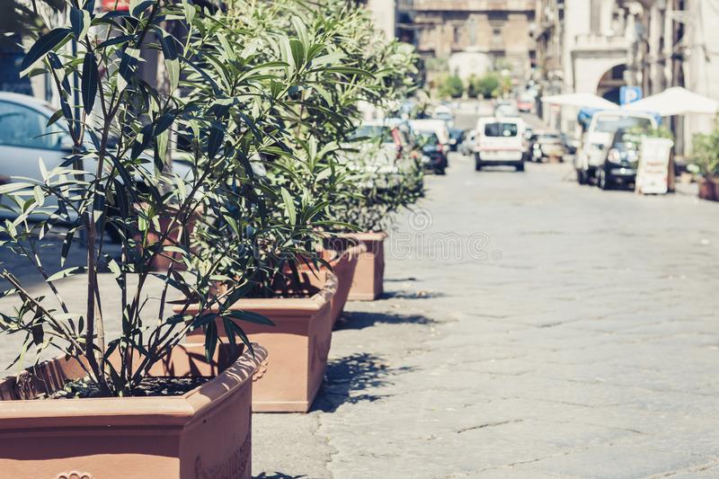 Beautiful cityscape of Italy, decorative plant in pots on historical street of Catania, Sicily.  stock images