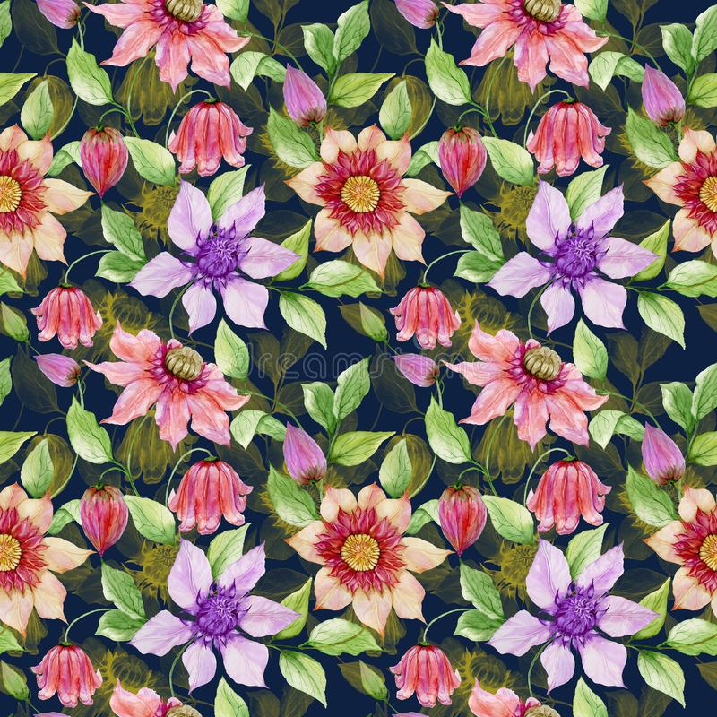 Beautiful clematis flowers on climbing twigs against black background. Seamless floral pattern. Watercolor painting. Hand painted illustration. Fabric royalty free illustration