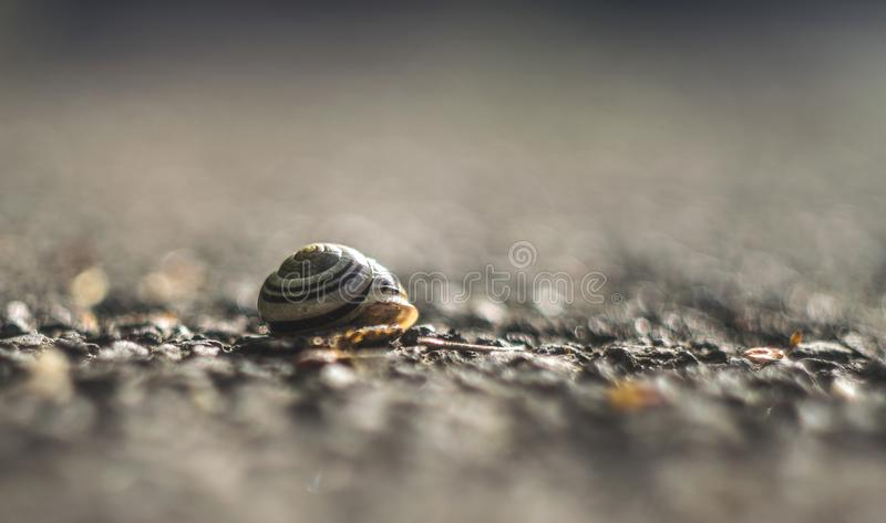 Beautiful close up of an empty snail shell royalty free stock photography
