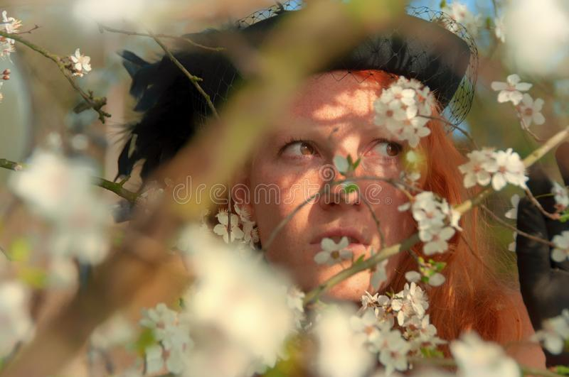 Beautiful close-up portrait of a young elegant red-haired curly woman in tree with white apple-tree cherry tree blossoms stock image