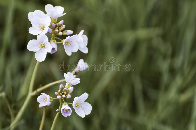 Beautiful close up of a white flowers royalty free stock photos
