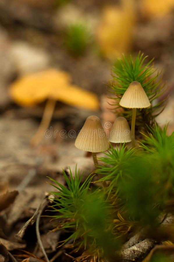 Beautiful closeup of forest mushrooms royalty free stock photo