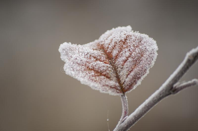 Beautiful closeup of ice crystals on autumn leaf. In sunlight at sunrise royalty free stock photo