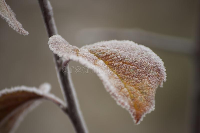 Beautiful closeup of leaf with rime crystals in the autumn morning. On blurred background stock photo