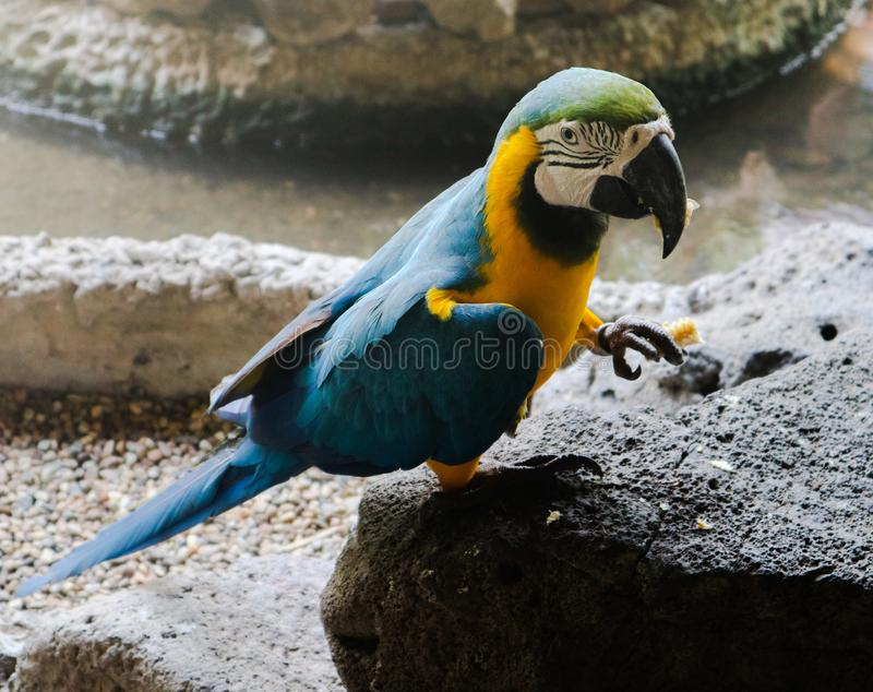 Beautiful closeup Macaw and Parrot birds in the public parks stock images