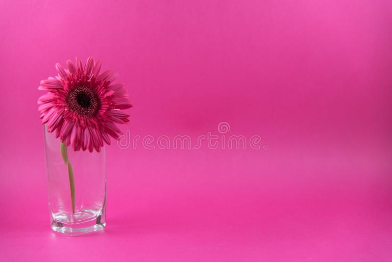 Beautiful closeup of pink flower with vase on pink background, wallpaper, pink flower background,. Beautiful closeup of pink flower with vase, wallpaper, pink stock photos