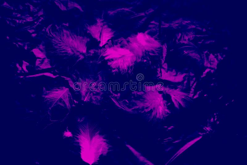 Beautiful closeup textures abstract the falling feathers black and purple color isolated wall background and pattern. S royalty free stock photos