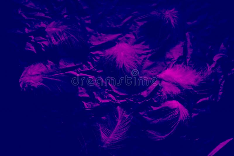 Beautiful closeup textures abstract the falling feathers black and purple color isolated wall background and pattern. S stock photography