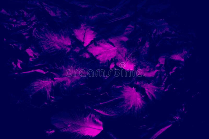 Beautiful closeup textures abstract the falling feathers black and purple color isolated wall background and pattern. S royalty free stock images