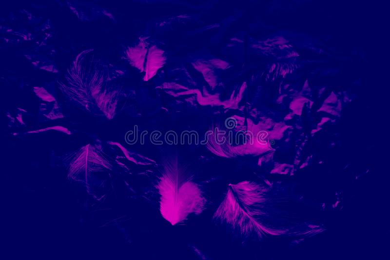 Beautiful closeup textures abstract the falling feathers black and purple color isolated wall background and pattern. S stock image