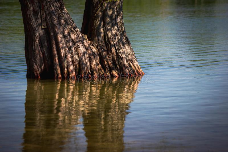 Tree and Reflection at Clear Lake. Beautiful closeup of a tree submerged in water at Clear Lake and its reflection, LaPorte, Indiana stock images