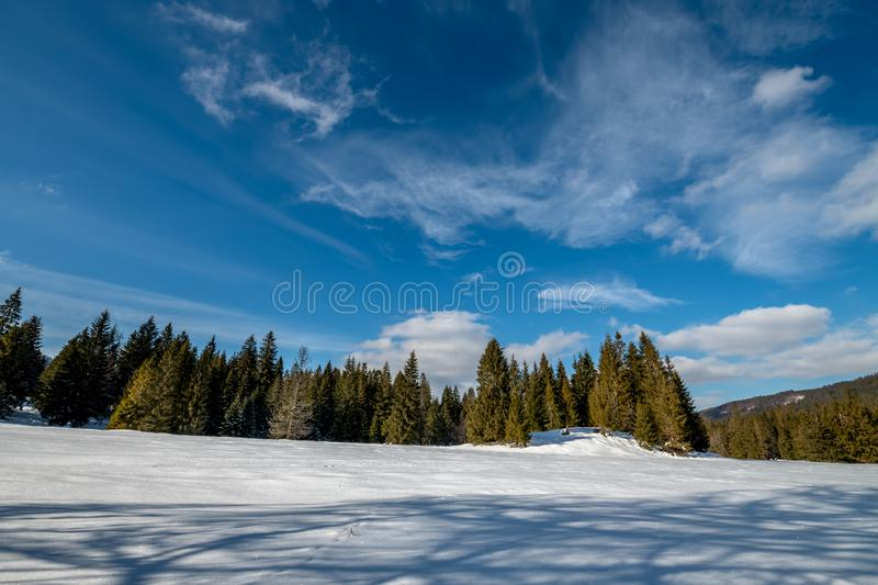 Beautiful clouds in the blue sky. Below is an old spruce forest in winter scenery royalty free stock images