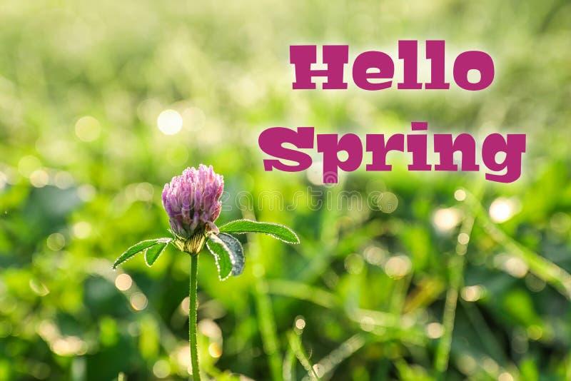 Beautiful clover flower on green meadow stock illustration
