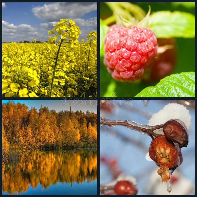 Four seasons collection. Beautiful collage of four pictures representing each season in year. Spring, summer, fall and winter Images taken in free nature as a royalty free stock images