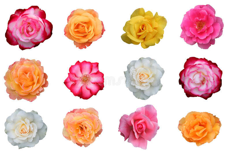 Download Beautiful Collection Of Rose Blossoms Stock Image - Image: 5801601