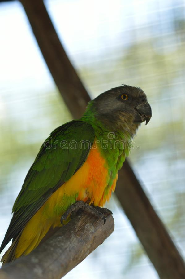 Beautiful collorful birds. In a few zoos on the world royalty free stock photos
