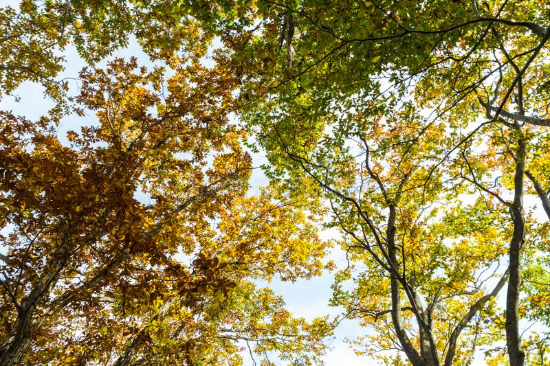 Beautiful color park with colorful trees up risen view. Autumn landscape royalty free stock photos