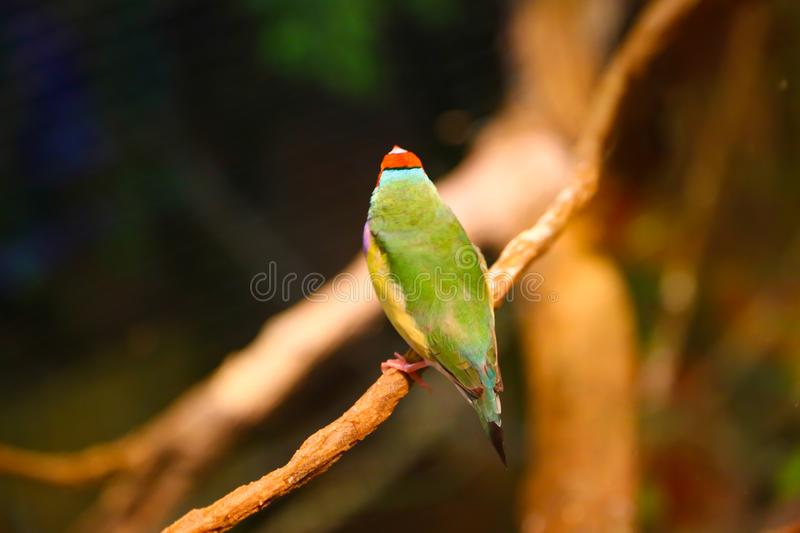 Beautiful colored Birds. At aquarium Dubai royalty free stock photos