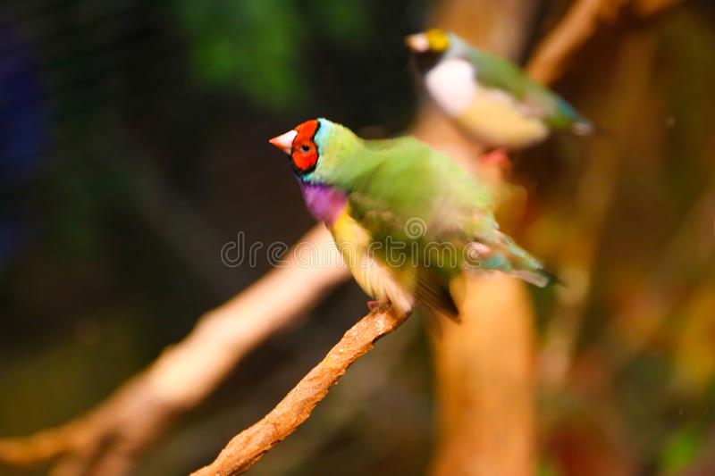 Beautiful colored Birds. At aquarium Dubai royalty free stock photography