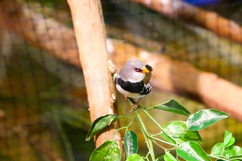 Beautiful colored Birds. At aquarium Dubai stock image