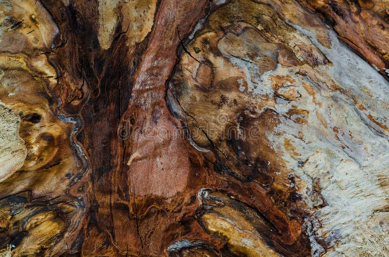 Beautiful colored core of the tree ash in cut, closeup stock photography