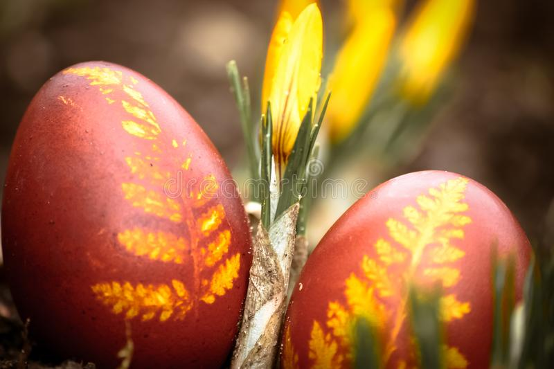 A beautiful, colored red Easter egg in the backyard. Traditional spring food and festival. Old film look stock photography