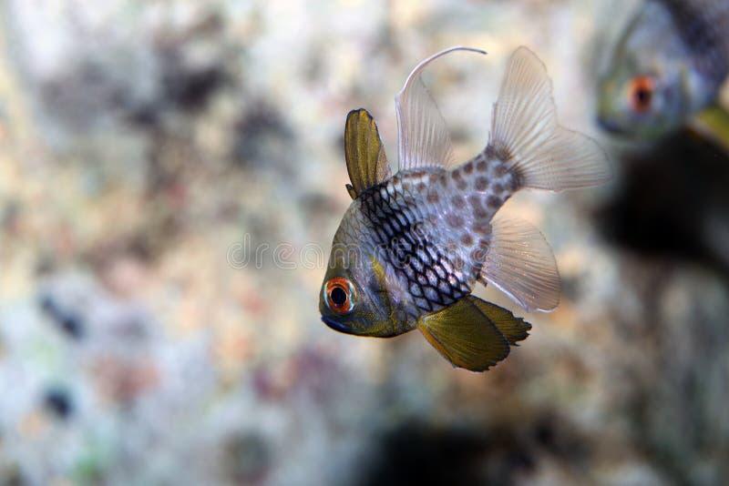 Salt water fish. Beautiful and colored salt water fish stock photo