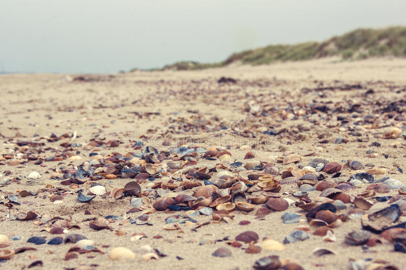Beautiful colored shells on a beach royalty free stock photo