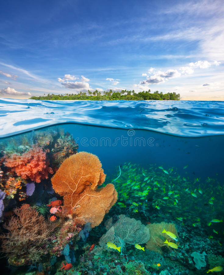 Beautiful colored soft coral garden. royalty free stock photo