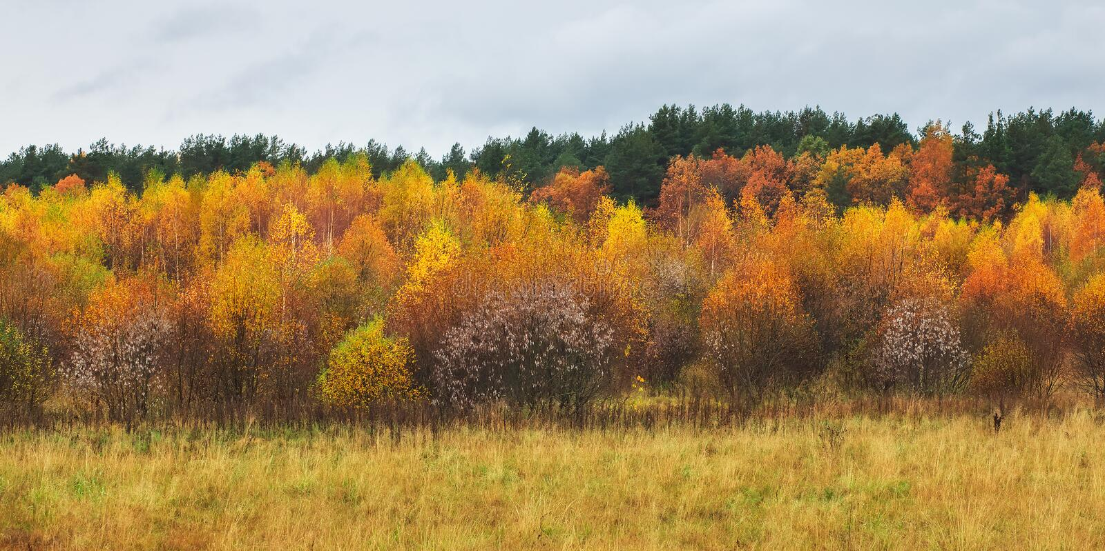 Beautiful colorful autumn forest, cloudy rainy weather. Landscape with multi-colored trees. composition of nature royalty free stock photos