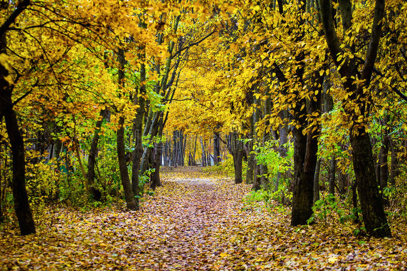 Beautiful colorful autumn landscape. Autumn landscape with color royalty free stock image
