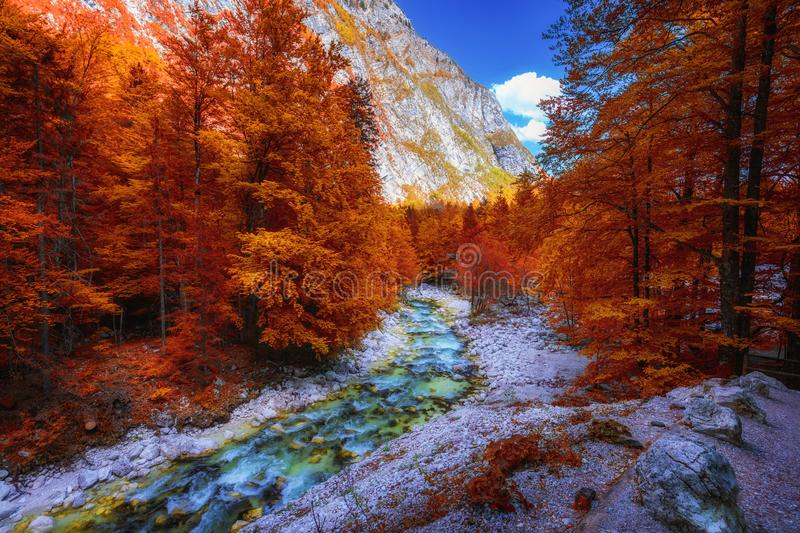 Beautiful colorful autumn landscape with a stream and forest in toned colors. The river in autumn forest and the sun shining royalty free stock photo