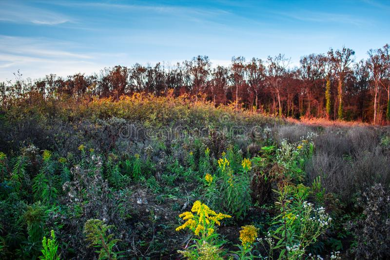 Beautiful colorful autumn meadow and forest full of flowers stock image