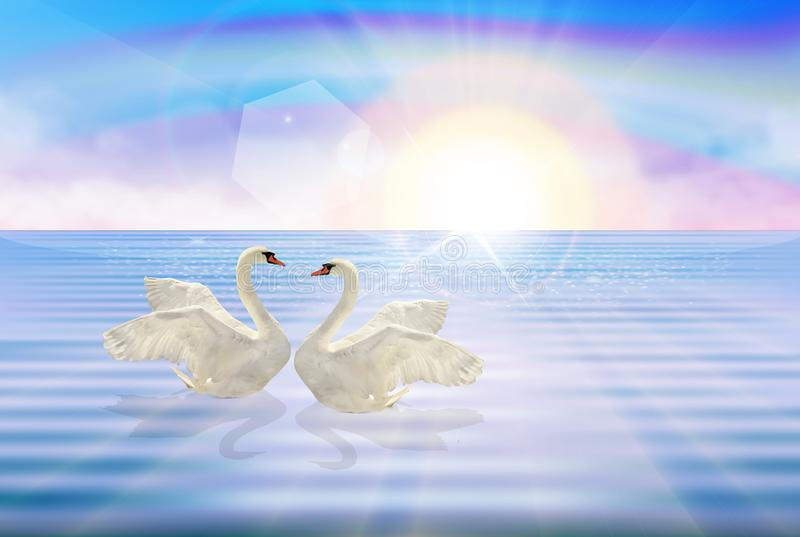 White Swans couple on lake rainbow sky wallpaper stock illustration