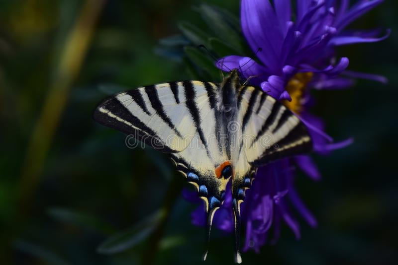 Beautiful colorful butterfly on the flower stock photography
