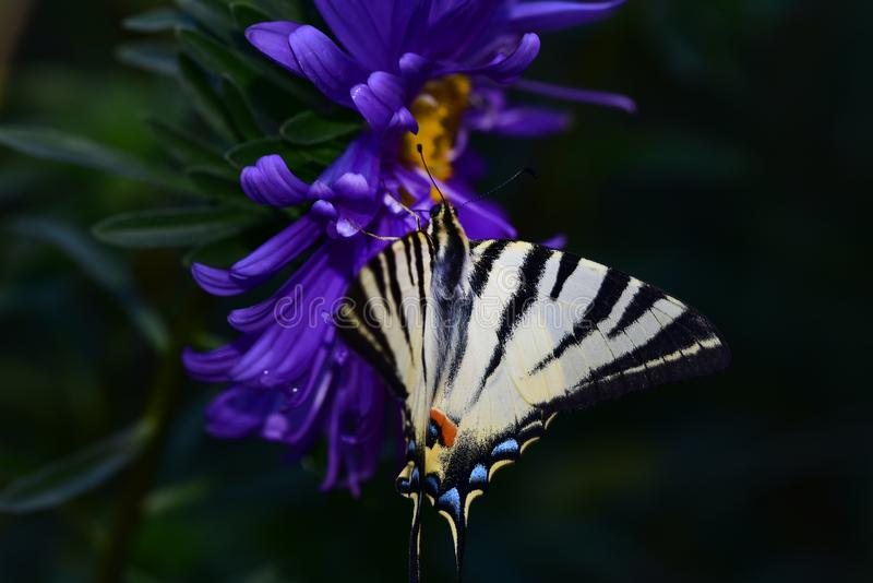 Beautiful colorful butterfly on the flower royalty free stock images
