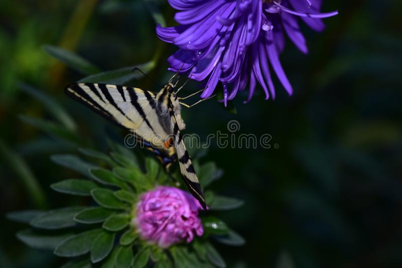 Beautiful colorful butterfly on the flower royalty free stock photos
