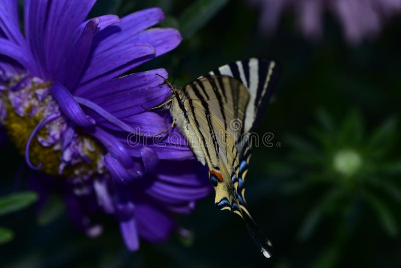 Beautiful colorful butterfly on the flower stock photos