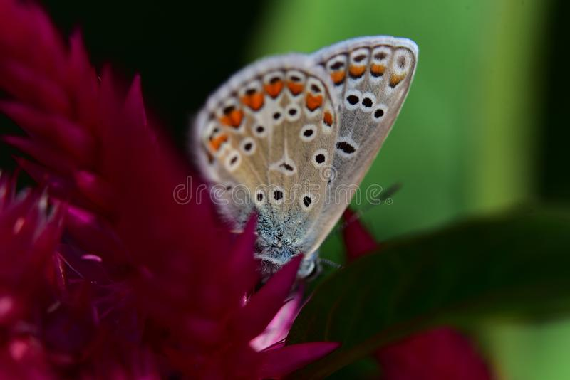 Beautiful colorful butterfly on the flower stock photo