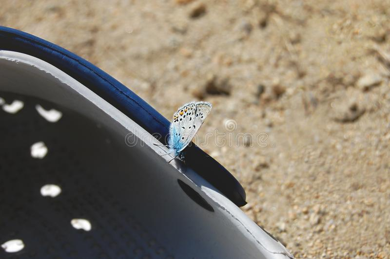 Butterfly sits on flip-flops stock image