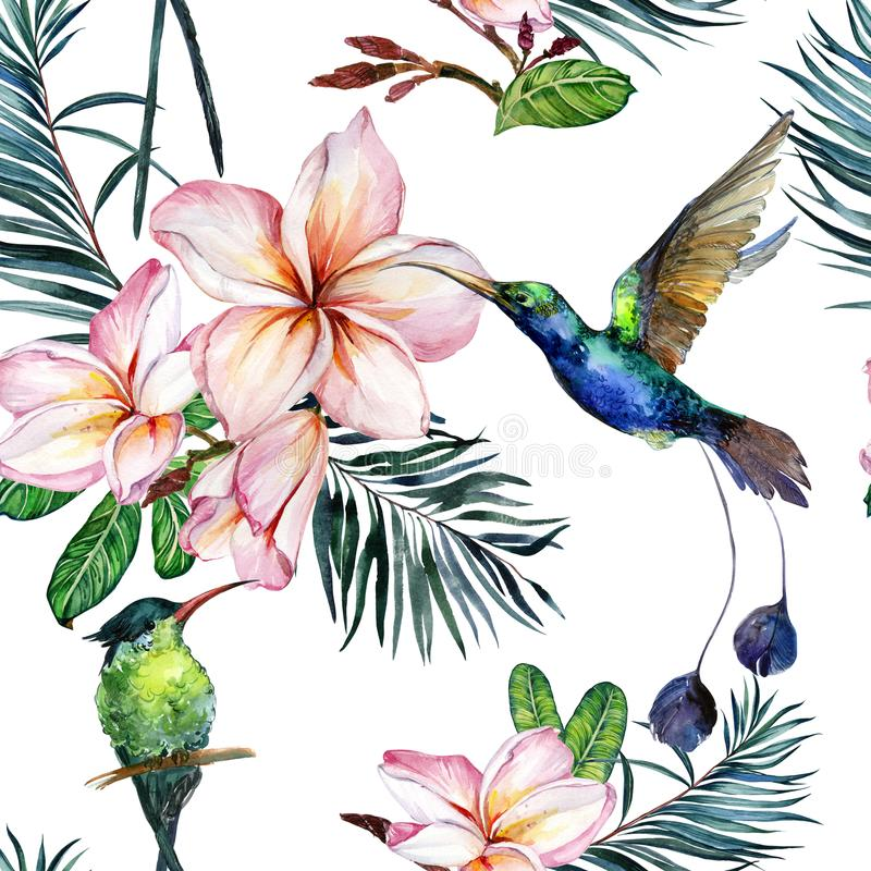 Beautiful colorful colibri and pink plumeria flowers on white background. Exotic tropical seamless pattern. Watecolor painting. Hand painted illustration vector illustration