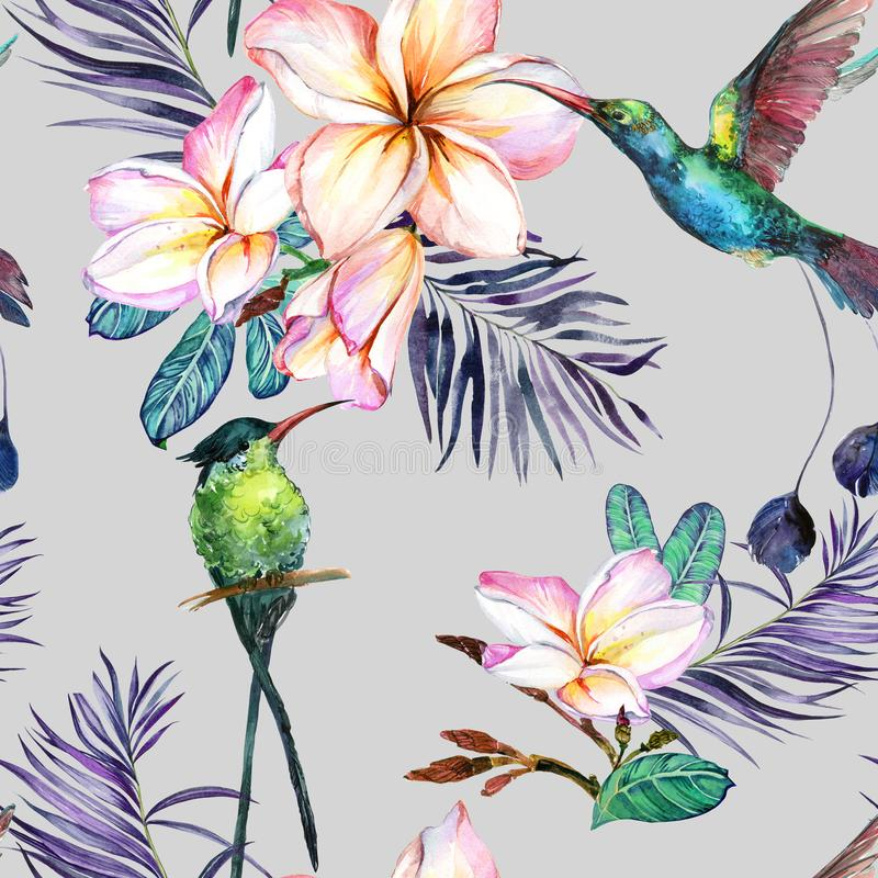 Beautiful colorful colibri and plumeria flowers on gray background. Exotic tropical seamless pattern. Watecolor painting. Hand painted illustration. Wallpaper royalty free illustration