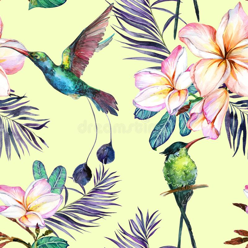 Beautiful colorful colibri and plumeria flowers on light green background. Exotic tropical seamless pattern. Watecolor painting. Hand painted illustration stock illustration
