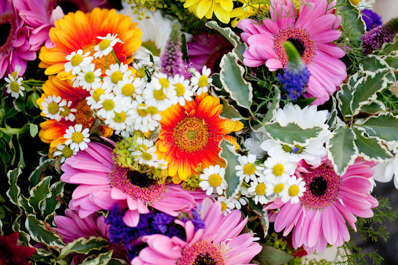 Beautiful colorful collection of flowers spring summer celebration. Card macro stock photography