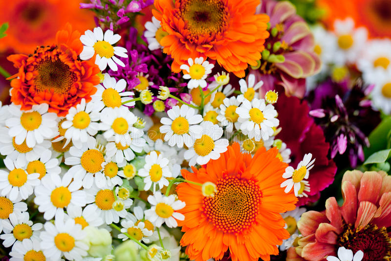 Beautiful colorful collection of flowers spring summer celebration. Card macro royalty free stock image