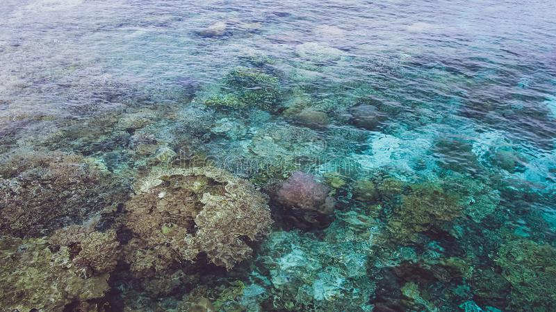 Beautiful colorful corals visible in transparent crystal clear ocean water near Mansuar island in Raja Ampat. West Papua. Indonesia stock images